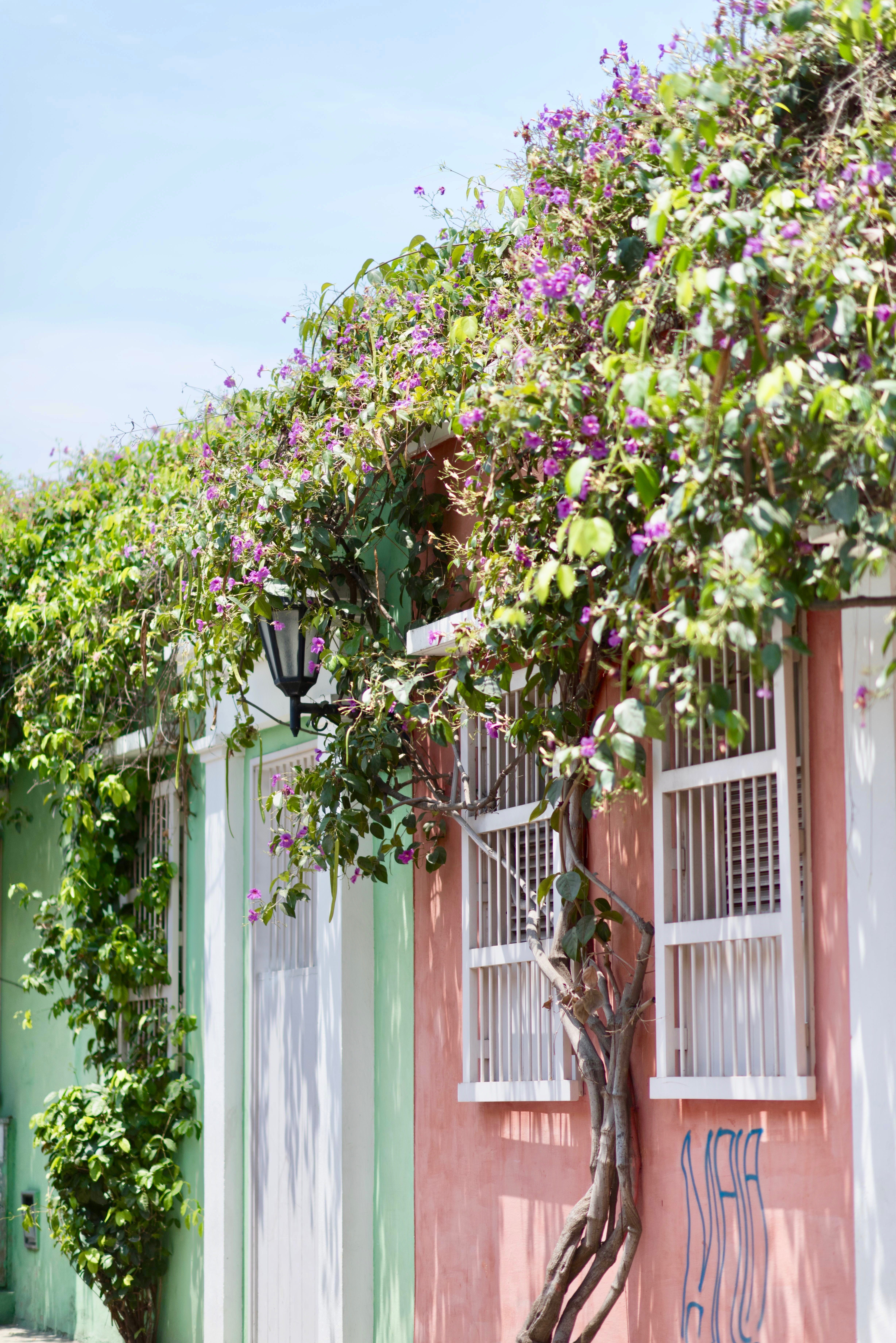 Bright flowers in Cartagena